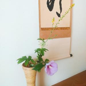 8月の茶花 木槿、金水引 and