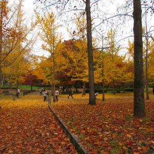 紅葉狩りは今年は天童市だけで終わりました。。。