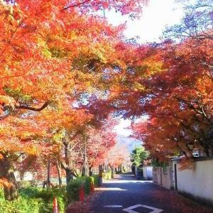 京都日常の紅葉