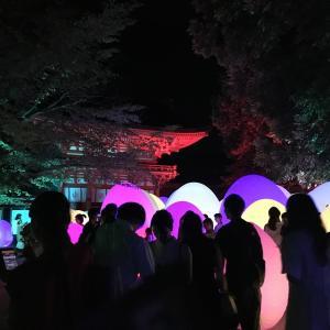 光るたまごがたくさん!?下鴨神社 糺の森ライトアップ