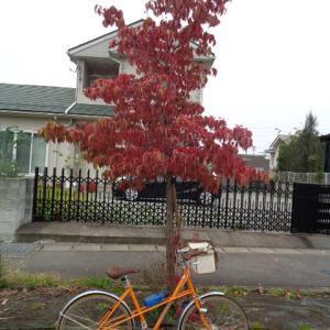 秋は速く時間が進む?