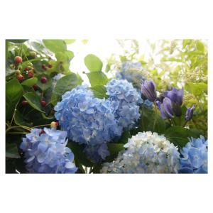 紫陽花やベリー、クレマチスのブーケセット