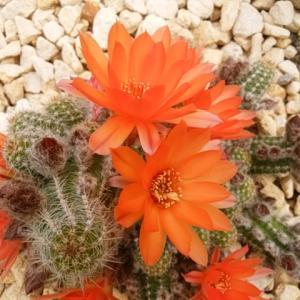 フラワーエッセンスの創始者たちの様な植物と話す人たちの共通点とは?