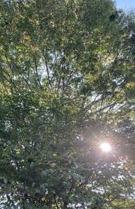 爽やかな朝 城下公園の風景です