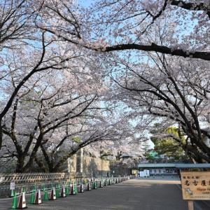 2020年 桜満開