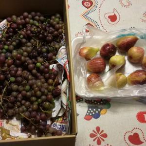 葡萄の収穫、今期最後ですw