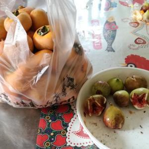 今日もサツマイモと柿の収穫です♪