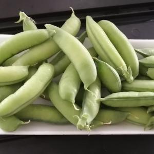 エンドウ豆の初収穫とトマトの植え付けw