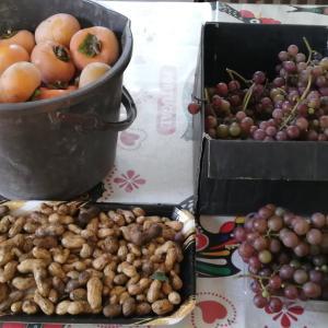 柿の収穫開始♪