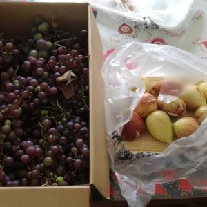畑の葡萄も殆ど終わりですw