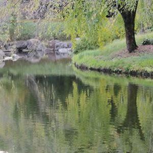 木の実落ち幽かに沼の笑ひけり  大串 章