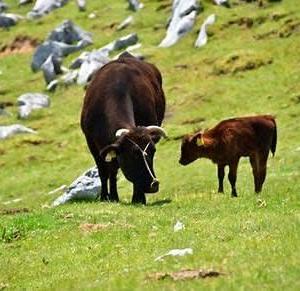 六月とは遠くの牛の傾きなり塩野谷仁