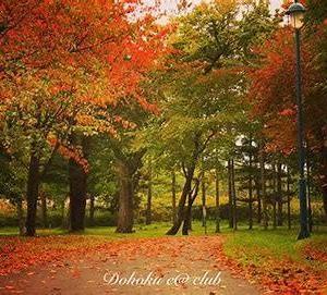 いつよりか秋の歩幅になりにけり根岸敏三