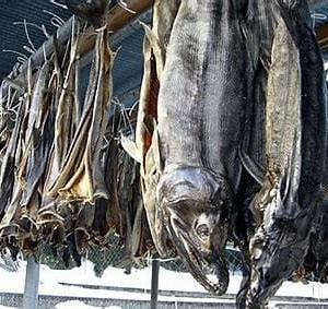 みちのくの乾鮭獣の如く吊り山口青邨