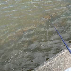 初めてのテナガエビ釣り