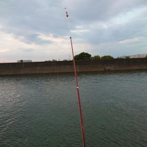 仲良く一匹づつ釣りました。
