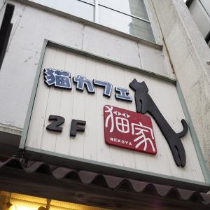 猫cafe猫家in小江戸川越