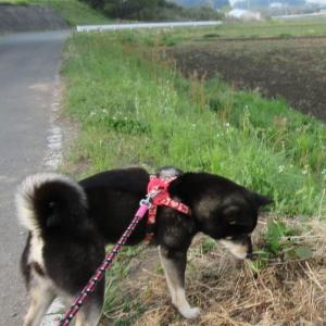 ひめちゃん&獅子丸の山上城散歩