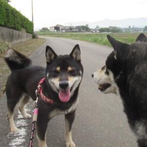 狛犬3代・網戸城趾の網戸神社