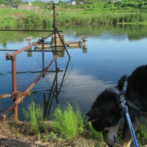 葛塚の3沼物語