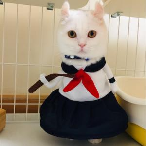 食べるか寝るか襲う白猫。。。
