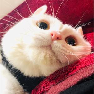 定休日の白猫ホワイティー