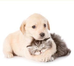 獣医に聞いた!犬や猫は新型コロナウイルスにかかるの?