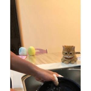 洗い物をする間見つめていてくれる猫ちゃんが可愛すぎる~!