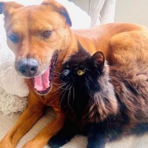 雷を怖がる犬を慰める猫に飼い主感激と感謝!