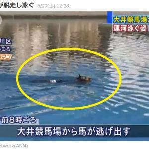 大井競馬場からまた馬が逃げた!運河を泳いでいるところを捕獲~!