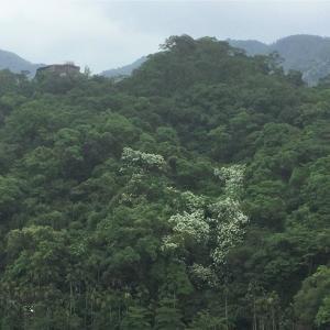 台湾に降る雪