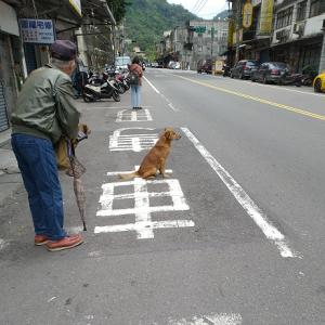 バス待ち犬
