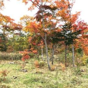 山麓の家の紅葉