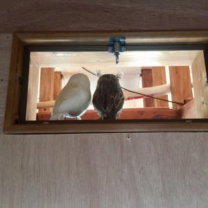 開け閉めできる室内窓を DIY!