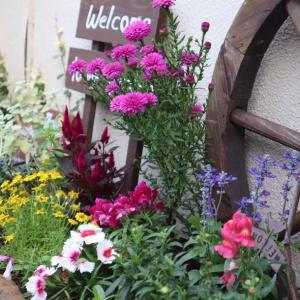 お花のある暮らし:花壇の植え替えで「気」を変える