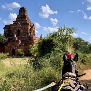 バガン2日目① ゆったり馬車で巡る仏教遺跡と、ローカル市場。