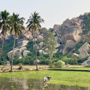 【インド】ハンピ2日目② モンキー・テンプルからの絶景と、ハンピ村で一番人気のレストラン。