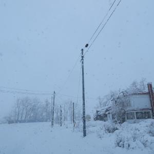 降っている雪
