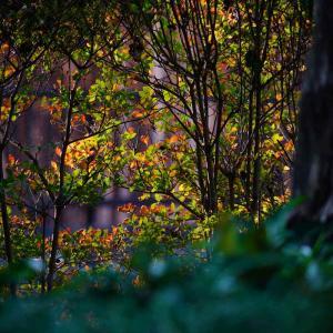 速報…響灘グリーンパークの薔薇などと遠賀川のコスモス