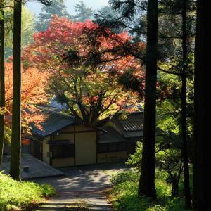 速報…雷山千如寺大悲王院の大楓と環境芸術の森の紅葉