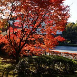 いいちこ日田蒸留所の紅葉