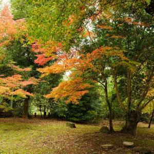 叢桂園・釣耕園の紅葉