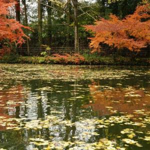小野泉水公園の紅葉