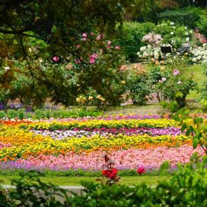 福岡市植物園の虹色花壇と温室の花