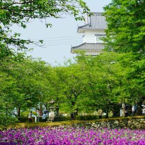 速報…大村公園の花菖蒲と祐徳稲荷神社の日本庭園