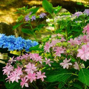 祐徳稲荷神社の日本庭園…続き