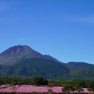 速報…しまばら火張山花公園と自然干陸地フラワーゾーンのコスモスとおまけ