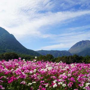 しまばら火張山花公園の続き