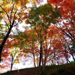 用作公園の紅葉…続き