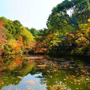 宝生寺の紅葉の水鏡
